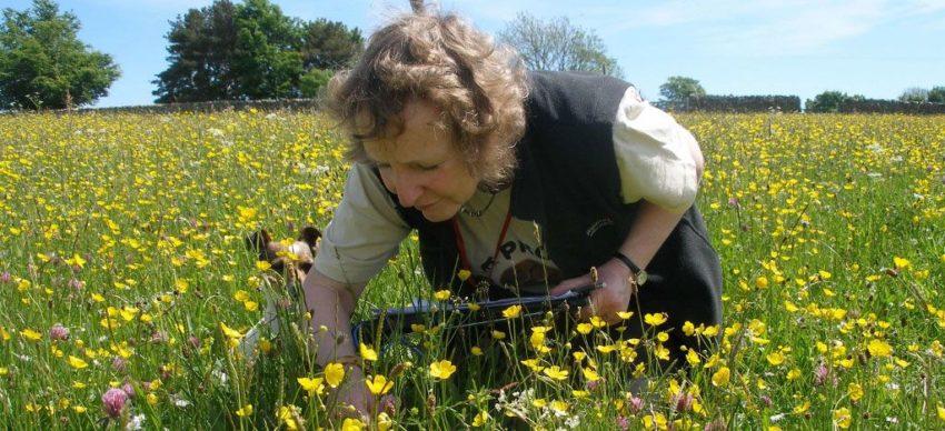 Surveying meadows